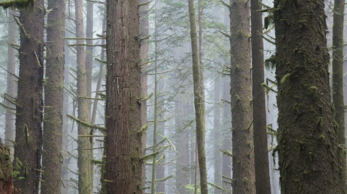 redwoods-national-park-2-copy.jpg (700×392)